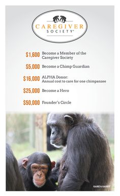 Save the Chimps established the Caregiver Society to recognize our most generous patrons, whose compassion has been vital to our efforts to provide the highest quality care possible to the chimpanzees.