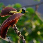 aves del paraiso (10)