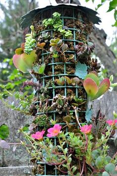 Upcycled birdfeeder made into a hanging succulent garden.