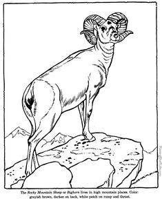 Wild Animal Coloring Pages - Animal Identification Sheets - Learning Animals- Also ABC and Counting sheets Farm Coloring Pages, Animal Coloring Pages, Adult Coloring, Coloring Books, Coloring Sheets, Animal Sketches, Animal Drawings, Big Horn Sheep, Sheep Crafts