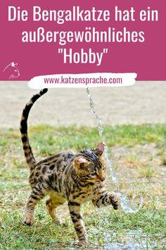 Was die Bengalkatze mag, ist bei anderen Katzen nicht so beliebt ... #katze #katzen# bengal #bengalkatze #bengalkatzewasser #katzenverhalten #wohnungkatzen #schönekatzen #katzenhacks #katzentipps #katzegesundheit