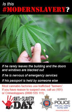 If you suspect a cannabis farm in your neighbourhood, please contact your local police force on 101.  #ModernSlavery #AntiSlaveryDay