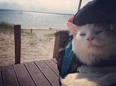 "744 Likes, 12 Comments - 🐾Cezar The Travelling Cat 🐈 (@cezars.crew) on Instagram: ""Having a break by the beach - #biketour day 17 - #germany 🇩🇪 2015"""