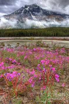 ✯ Pink To Peak - Banff National Park, Canada