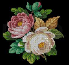 berlin work type roses - pretty!