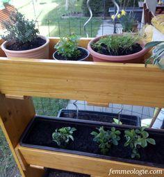 gardening, Garten, Vertikalbeet, DIY Gardening, Detox, 21st, Tags, Plants, Blog, Lawn And Garden, Blogging, Plant