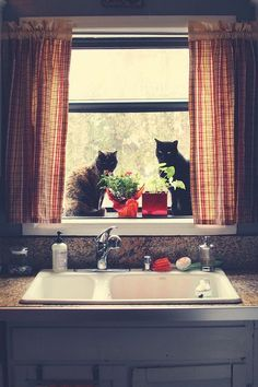 ♥ Cats In Window ♥