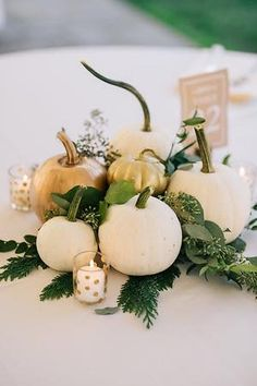 Available for Fall 2018 weddings! Pittsburgh wedding rustic decor pumpkin c Available for Fall 2018 weddings! Pittsburgh wedding rustic decor pumpkin c Fall Rehearsal Dinners, Rehearsal Dinner Decorations, Country Wedding Decorations, Fall Wedding Centerpieces, Fall Wedding Table Decor, Quinceanera Centerpieces, Jar Centerpieces, White Pumpkins Wedding, White Pumpkin Centerpieces