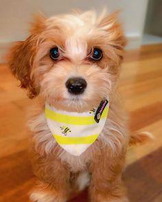 Super cute dog bandana by Pebblina with a Bee design. Super Cute Dogs, Cute Bee, Dog Facts, Bee Design, Dog Bandana, Bandanas, Making Out, Fashion Accessories, Animais