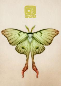 Lunar Moth by tmdurn7