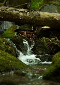 These Beautiful Nature GIFs Will Leave You Perfectly Relaxed