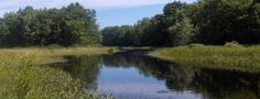 pemaquid_river_summer.jpg (610×235)