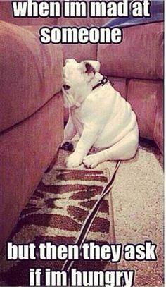 When Im Mad At Someone. funny memes animals dogs dog pets meme lol funny quote funny quotes funny sayings humor funny animals Funny Animal Memes, Funny Animal Pictures, Cute Funny Animals, Funny Cute, Funny Dogs, Cute Dogs, Animal Humor, Funny Photos, Funny Bulldog