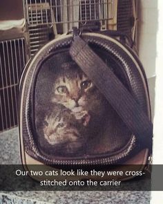 45 Photos Where We See Something That's Not There Brain Teasers, Lunch Box, Cross Stitch, Cats, Photos, Mind Games, Punto De Cruz, Gatos, Pictures