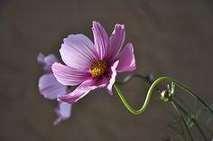 Blume, Pflanze, Blüte, Krásenka, Sommer