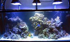 Simple And Effective Guide On Reef Aquascaping News Reef Builders