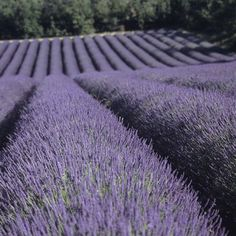 "Vive La Lavande!, Natural Products That Fight Acne:   While most oils need to be diluted, lavender is the only one you can use straight topically. Its antifungal and antiseptic properties will reduce the signs of acne and calm and minimize inflammation from breakouts. Soon you'll look in the mirror and say, ""Ooh la la!"