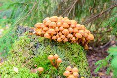 magic mushrooms hallucinations