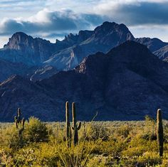 Kofa National #WildlifeRefuge is the second-largest wilderness area in #Arizona and home to a startling variety of plants and animals. Gila monsters, desert bighorn sheep, golden eagles and foxes find food and shelter in misty mountains and cacti-covered plains. Indeed it is a place of surprise and wonder. Photo courtesy of Andrew R. Slaton (@andrewrslaton). @usfws #travel #usinterior
