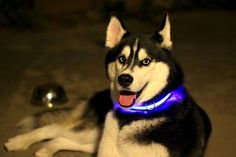 Ponha um toque de LED na sua vida - High-Tech Girl    Halo Mini, a coleira iluminada com LEDs