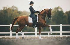 horses | Tumblr
