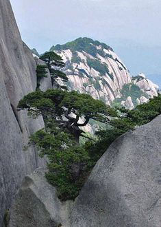 Promoting and Expanding the Bonsai Universe All Nature, Amazing Nature, Nature Gif, Tree Photography, Landscape Photography, Scenery Pictures, Unique Trees, Exotic Plants, Fantasy Landscape