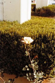 WILLIAM EGGLESTON - Flowers