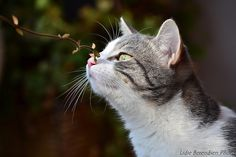Mishi sniffing by Lidie71, via Flickr