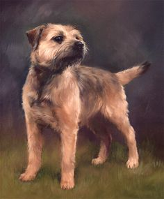 Border Terrier Limited Edition Dog Print by Canine Artist Jacqueline Stanhope