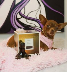 Gucci ❤️'s gifts! Thanks, Oribe & Luxury Brand Partners. She is in love with her Oribe Côte d'Azur Eau de Parfum! #TwiggsSalon