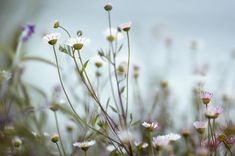Feel the Springtime - Super soft photographs by Rachel Bellinsky