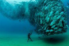 海フォトグラファーとして有名なオクタビオ・アブルト(Octavio Aburto)さんがメキシコにあるカボプルモ国立公園で撮った写真