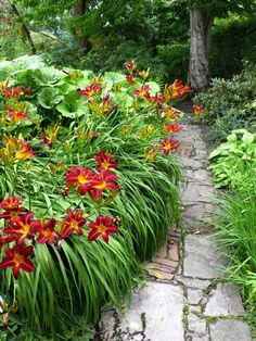 Daylilies can tolerate part shade at the entrance to a woodland shade garden.