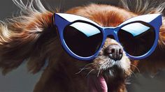 Step aside, supermodels: These dogs are fashion's newest stars