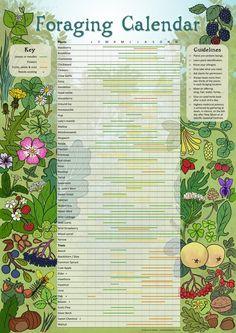 Wild Edibles, Hacks, Edible Plants, Growing Tree, Medicinal Plants, Survival Skills, Survival Tips, Survival Food, Survival Knife