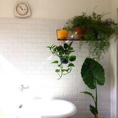 Instagram de Ritalachat : salle de bain végétale #shower #bath #green