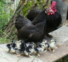 Ahhhh....what a cute family.