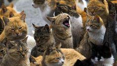 Trotz der Touristenströme versuchen die Bewohner, die Katzen-Population in den Griff zu bekommen. Zehn Tiere wurden bereits kastriert – weitere Eingriffe sollen folgen. - RTR