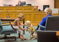Courthouse dogs: animais que tranquilizam vítimas em tribunais