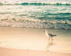 nautical decor birds photography beach decor by mylittlepixels