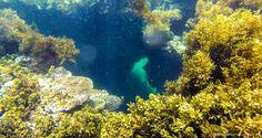 Snorkeling spot in Jomalig Island, Quezon (Photo credit: Hali Navarro)