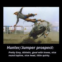 Equine For Sale listings... Funny because it's true!!!! This could not be anymore true lol
