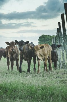 the whole gang (explored) by gdiazfor on Flickr.