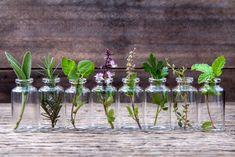 Hier sind 10 Kräuter, die du in Wasser wachsen lassen kannst und ein Jahr frisch bleiben