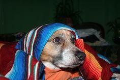 Lola... virgen de los canes.