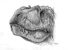 Albertosaurus sketch by ~PaleoPastori