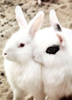Bunny Loves <3