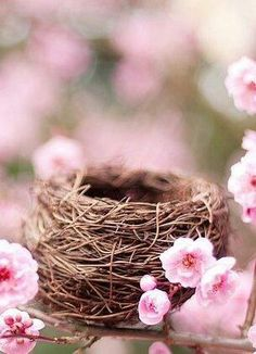This bird's nest surrounded by pink blossoms, captures the season of spring so well.