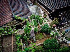 Garden anywhere! #gardensthatwin