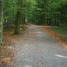 Pad in de herfst